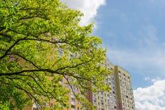 Il frammento della costruzione di appartamento contro della quercia si ramifica su foregr Immagine Stock Libera da Diritti
