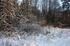 Il frammento di un bordo della foresta di inverno Fotografie Stock Libere da Diritti