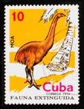 Il francobollo cubano mostra il maximus del nord di Moa Dinornis del gigante dell'isola, serie estinto degli uccelli, circa 1974 Immagini Stock Libere da Diritti