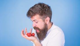 Il fronte avido affamato gridante dell'uomo con la barba mangia le fragole Non tocchi la mia bacca Non andare affamato avido dell fotografia stock libera da diritti