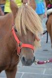 Il fronte del cavallo Fotografia Stock Libera da Diritti