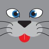 Il fronte del gatto di Cutie Fotografia Stock