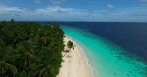Il fuco di Arial ha sparato con la spiaggia, la palma e l'oceano archivi video