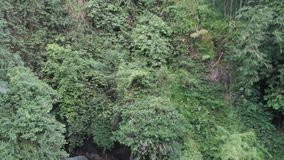 Il fuco ha sparato l'antenna segue la corrente sopra la cascata selvaggia della roccia nelle palme tropicali nelle giungle 4k di  stock footage