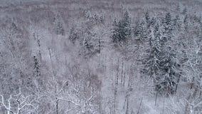Il fuco rivela il paesaggio dell'inverno nella foresta archivi video