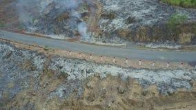 Il fuco si muove vicino ai pali della strada fra i motivi bruciati della cenere video d archivio