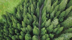 Il fuco sorvola una strada attraverso gli alberi verdi della foresta video d archivio