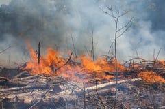Il fumo e le fiamme durante il fuoco prescritto bruciano Fotografia Stock Libera da Diritti
