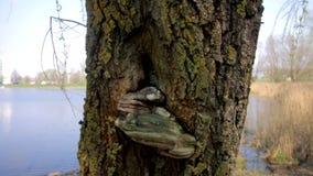 Il fungo dell'albero si sviluppa su un tronco di albero nel lago Nella sosta della citt? stock footage