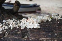 Il fungo della pila aumenta su sull'albero umido del tronco abbia sfuocatura della spiaggia di sabbia Fotografia Stock