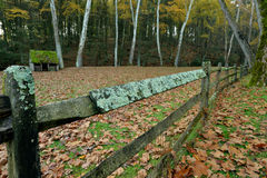 Il fungo ed il muschio hanno coperto il recinto che circonda un campo d'alimentazione delle pecore Fotografia Stock Libera da Diritti