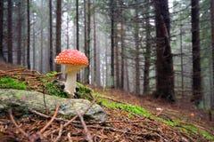Il fungo rosso Fotografia Stock Libera da Diritti