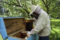 Il funzionamento dell'apicoltore raccoglie il miele fotografia stock