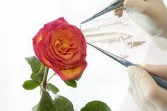 Il funzionamento di cardiologia con colore rosso è aumentato Fotografia Stock