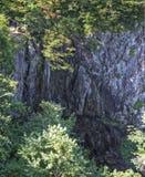 Il funzionamento globale cade nel parco nazionale di Shenandoah Fotografie Stock