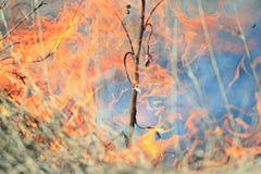 Il fuoco brucia le case con mattoni a vista del campo di erba Fotografia Stock