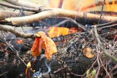Il fuoco del fuoco di accampamento del falò fiammeggia cocendo la bistecca alla griglia sul BBQ Fotografie Stock