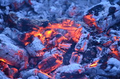 Il fuoco dentro l'albero Fotografie Stock