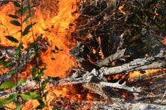 Il fuoco fiammeggia gli alberi brucianti Immagini Stock Libere da Diritti