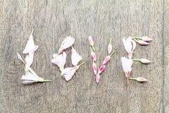 Il fuoco molle selettivo dei fiori rosa si è formato nell'amore di parola su fondo di legno d'annata Immagini Stock Libere da Diritti