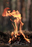 Il fuoco nella foresta Fotografia Stock Libera da Diritti