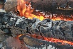 Il fuoco nella foresta immagine stock libera da diritti