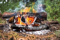 Il fuoco nella foresta su una fermata Fotografia Stock