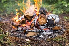 Il fuoco nella foresta su una fermata Immagini Stock