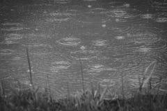 Il fuoco selettivo delle gocce di pioggia che cadono e che si increspano in una pozza o in un lago con la bolla dell'acqua e spru fotografia stock