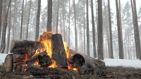 Il fuoco selvaggio del campo da grande collega la foresta dell'inverno sotto neve di caduta archivi video