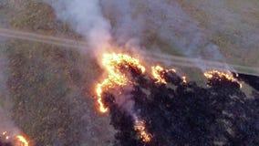 Il fuoco sul campo lascia una terra bruciata dietro  Movimento lento Vista dell'occhio del ` s dell'uccello archivi video