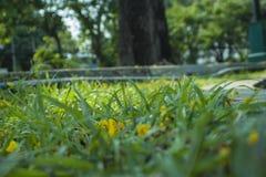 Il fuoco vago e molle molle della doccia dorata, cassia fistula, fabaceae, caduta gialla del fiore sul pavimento La Tailandia naz immagini stock libere da diritti