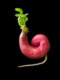 Il futuro di industria del GMO Fotografia Stock
