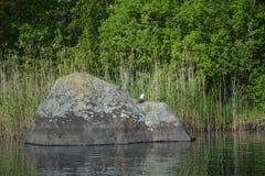 Il gabbiano è situato sulla grande pietra fotografia stock