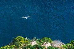 Il gabbiano di mare Fotografia Stock Libera da Diritti