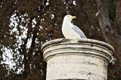 Il gabbiano riposa su una colonna di marmo Fondo delle fronde dell'albero fotografia stock libera da diritti