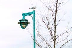 Il gabbiano si è appollaiato sopra la posta della lampada del turchese in Connecticut durante l'inverno Fotografia Stock Libera da Diritti