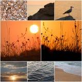 Il gabbiano sta su una pietra costiera ad una luce del tramonto del mare Bella vista sul mare Luce stupefacente di tramonto Il ga Immagini Stock