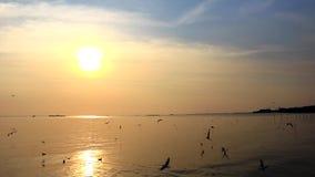 Il gabbiano vola in mezzo al mare e là al bello cielo stock footage