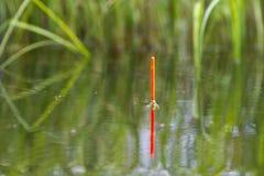 Il galleggiante da pesca si siede verticalmente nell'acqua del lago immagini stock libere da diritti