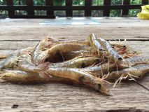 Il gamberetto vietnamita del greasyback o gamberetto della sabbia, metapenaeus ensis Fotografia Stock Libera da Diritti