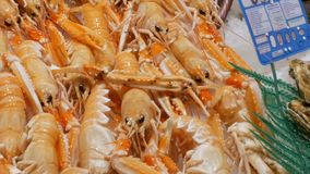 Il gambero dei gamberetti dei frutti di mare compensa la deriva sul contro mercato, frutti di mare nella La Boqueria del mercato  archivi video