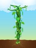 Il gambo di una pianta di fagioli illustrazione vettoriale
