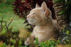 Il gattino Fotografia Stock