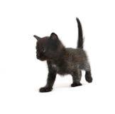 Il gattino Fotografie Stock Libere da Diritti