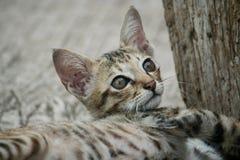 Il gattino Immagini Stock Libere da Diritti