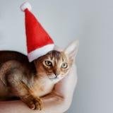 Il gattino abissino sveglio in un cappuccio di Santa, festa sta venendo Fotografia Stock Libera da Diritti