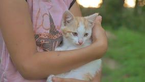 Il gattino castana della tenuta della ragazza nel suo gatto arma l'amore teenager all'aperto video d archivio