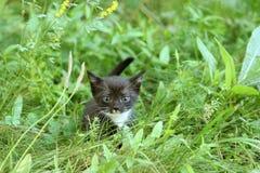 Il gattino cerca la madre Immagini Stock Libere da Diritti