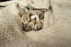 Il gattino che dorme in un maglione Fotografie Stock